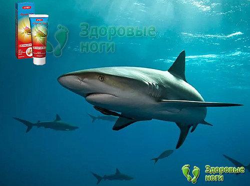 Акулий жир ускоряет регенерацию здоровых тканей.
