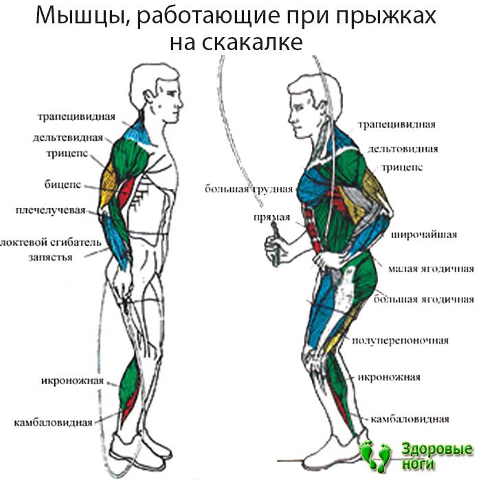 тренировка на скакалке для похудения для начинающих
